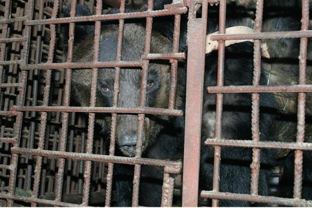 KINA - Page 2 Medvje10