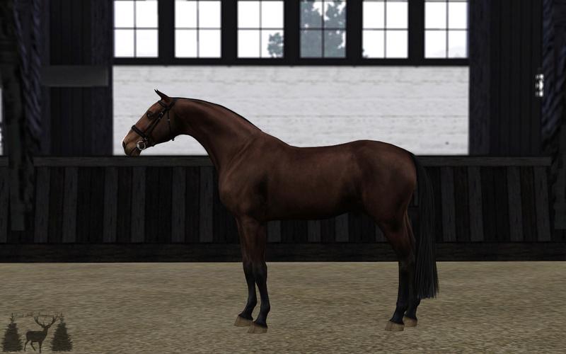 Регистрация лошадей в RHF 2 - Страница 7 Oaei1_10