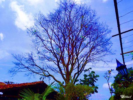 Árbol de colores  Arbol_11