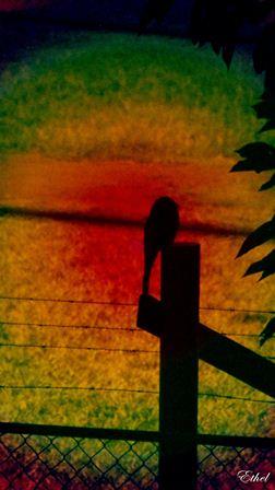 Foto manipulada 1 Pajaro11
