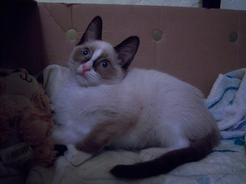 (Υιοθετήθηκε!) Ένα ...Πάντα στις μικρές αγγελίες! (Γαλανομάτικο γατόνι αναζητά αγάπη) 118_7715