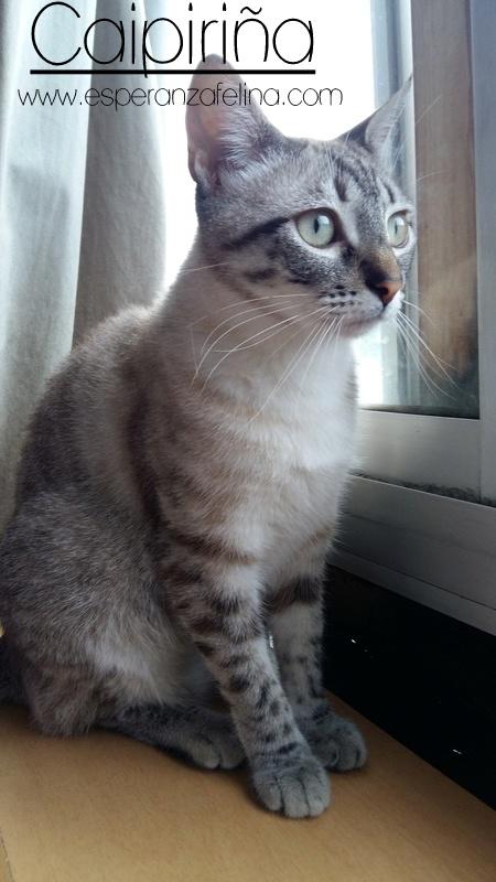 Caipiriña, preciosa peludina busca hogar, Alava (FN:12/05/16) ¡Adoptada! 20170611