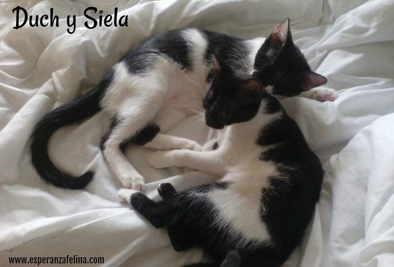 Siela, pequeña vaquita en adopción. (FN: 24/04/17) Álava 310