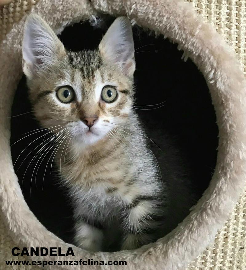 Candela, preciosa atigrada en adopción. Álava (F.N aprox: 03/05/2017) ¡Adoptada! Candel12
