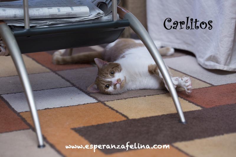CARLITOS, en busca de hogar ( Álava) ( F.N.aprox:5/16)  ¡Adoptado! Carlit11