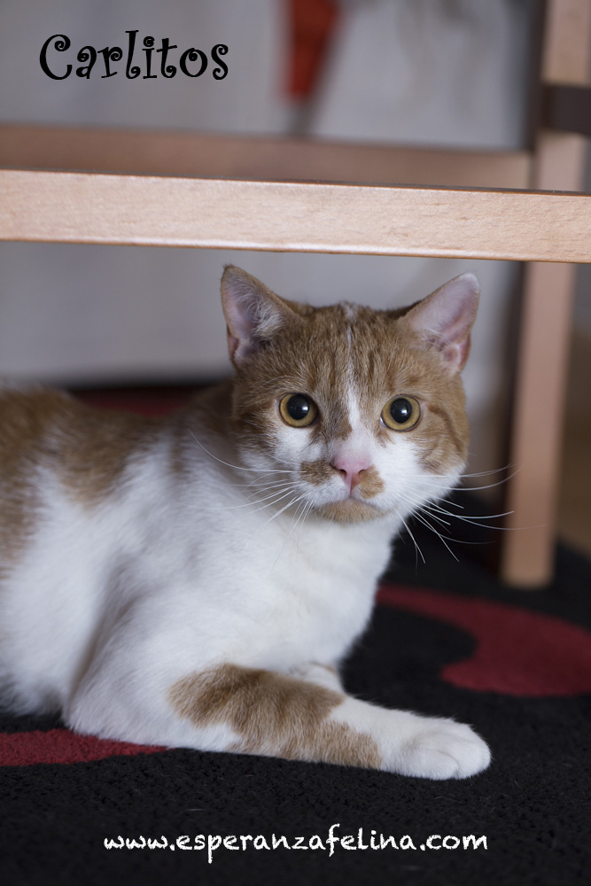 CARLITOS, en busca de hogar ( Álava) ( F.N.aprox:5/16)  ¡Adoptado! Carlit12