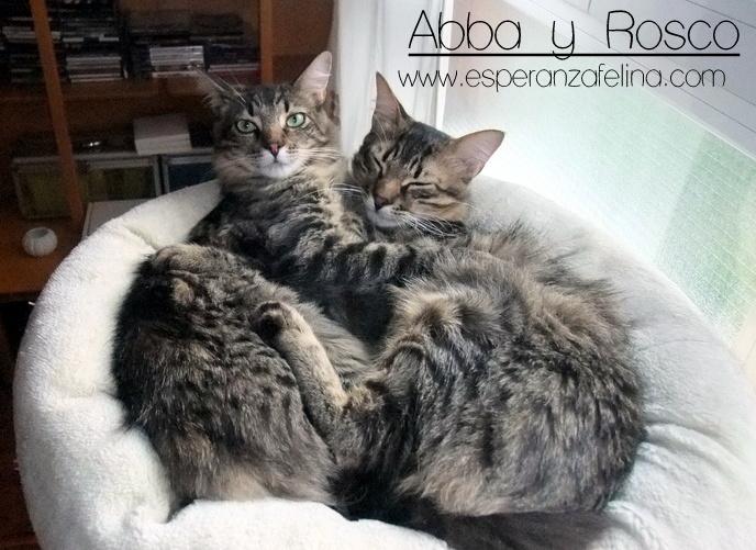 Abba y Rosco, hermanos peluchones en adopción (Fecha nac aprox: 09/16) ¡ADOPTADOS! Dscf4710
