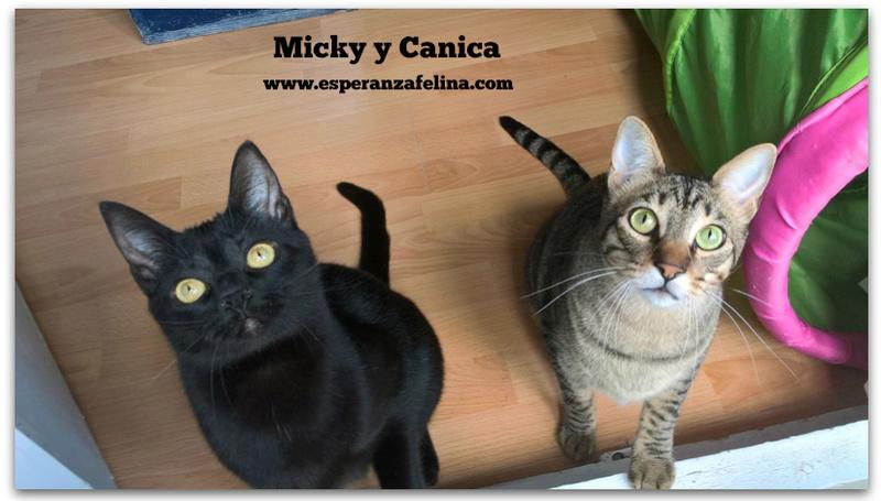 Micky y Canica, dos amores en adopción. (FN.Abril 2015) Álava Final_10