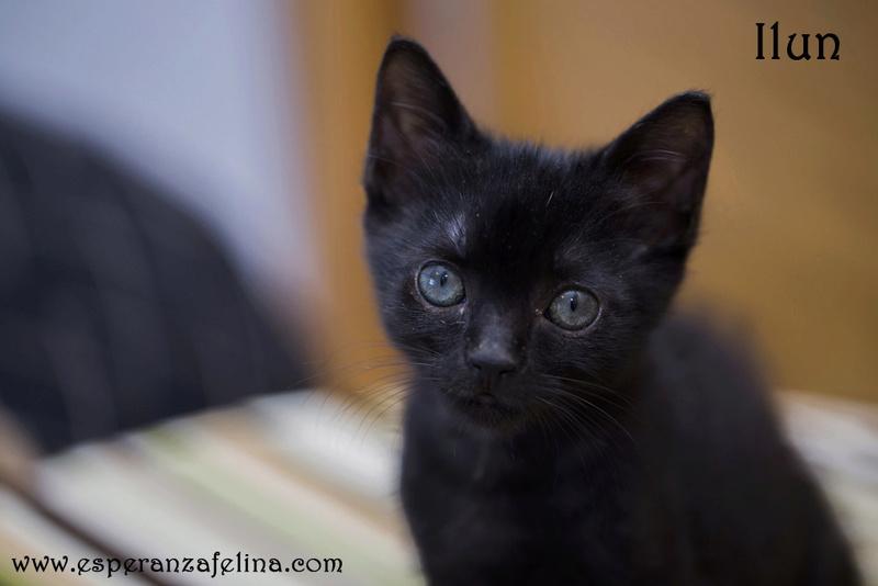 Ilun, adorable panterito en adopción. Álava (Fecha nacimiento: 05-04-17) ¡Adoptado! Ilun10