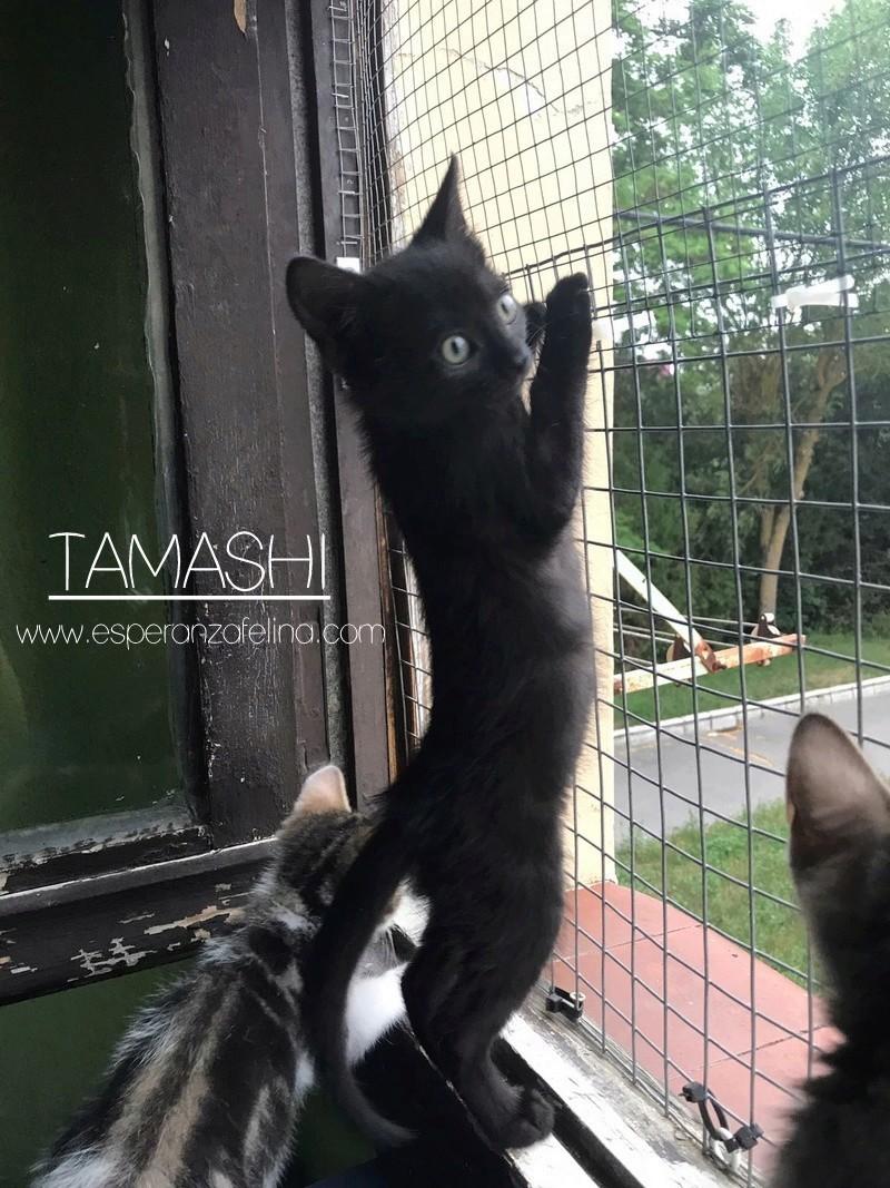 Tamashi, negrutxi en adopción. (FN.24/04/2017) Álava ¡Adoptada! Img-2010
