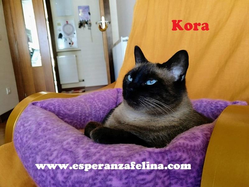 Kora, gata siamesa busca hogar, Álava (Fecha aprox. nacimiento 5/11) - Página 2 Kora110