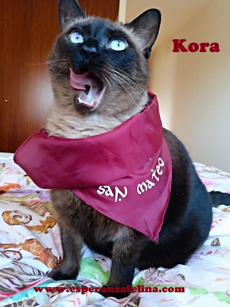 Kora, gata siamesa busca hogar, Álava (Fecha aprox. nacimiento 5/11) - Página 2 Kora210