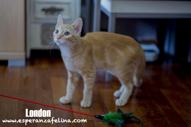 LONDON, en busca de hogar ( Álava) ( F.N.aprox: 5/17)  London10
