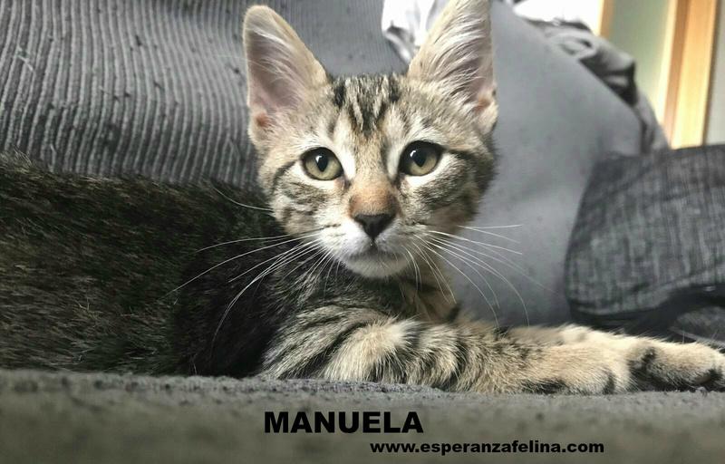 Manuela, lista y juguetona en adopción. Álava (F.N aprox: 03/05/2017) ¡Adoptada! Manuel11