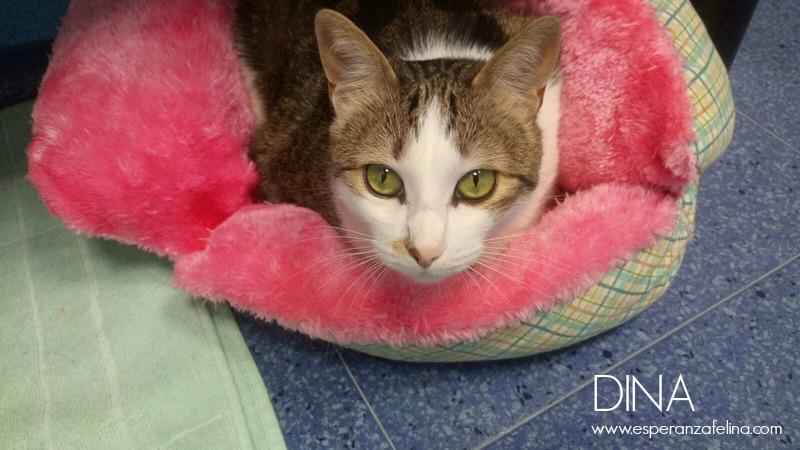 Dina, preciosa gata busca su hogar (Álava, fecha de nacimiento aproximada 10/04/2014 ) Ojazos10