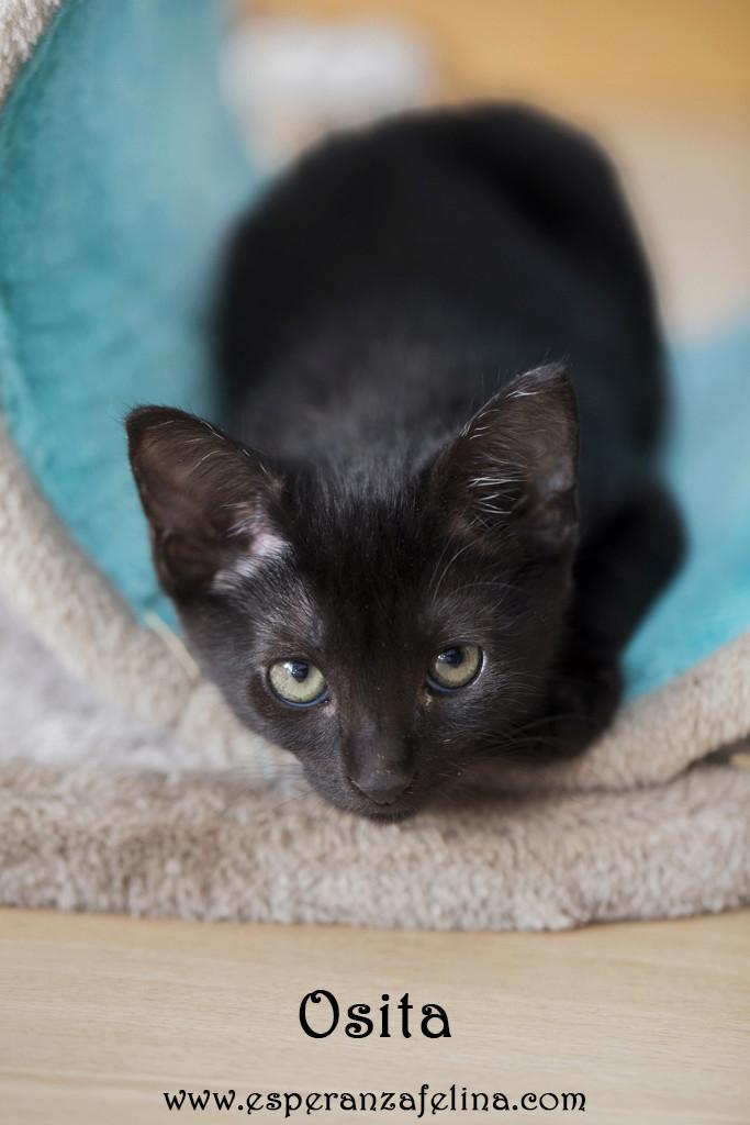 Osita, preciosa pantera en adopción. Álava (Fecha nacimiento: 05-04-17) ¡Adoptada! Osita11