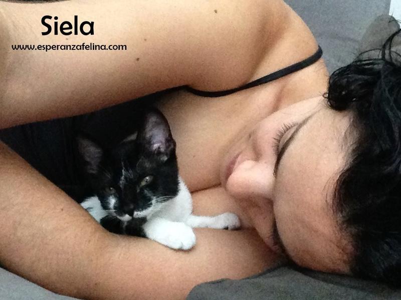 Siela, pequeña vaquita en adopción. (FN: 24/04/17) Álava Siela_11