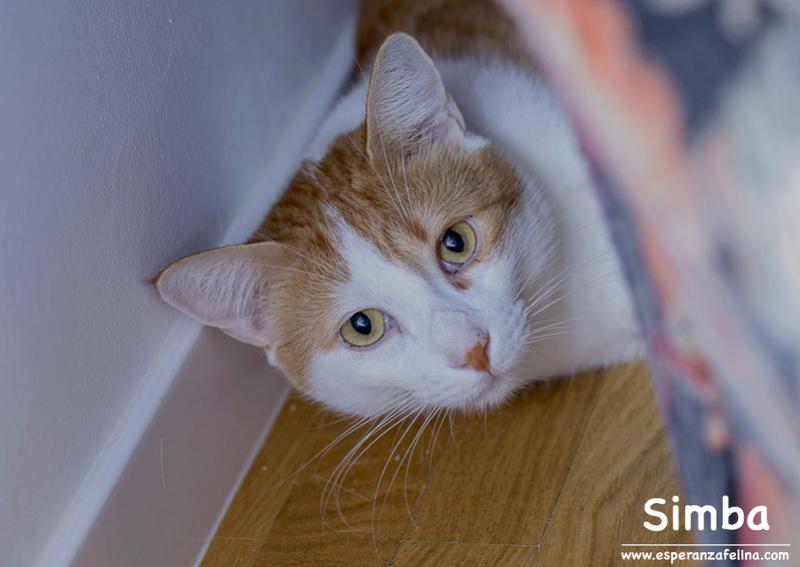 Simba y Rafiki, pareja muy especial en adopción. Alava (FN:15/09/15 ; 15/09/09) Simba110