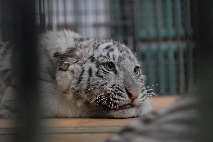 Всемирный День Кошек Img-2010