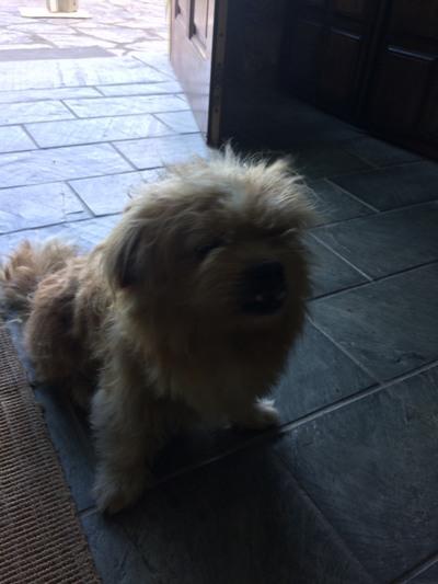Perro encontrado en Sada con dermatitis  110