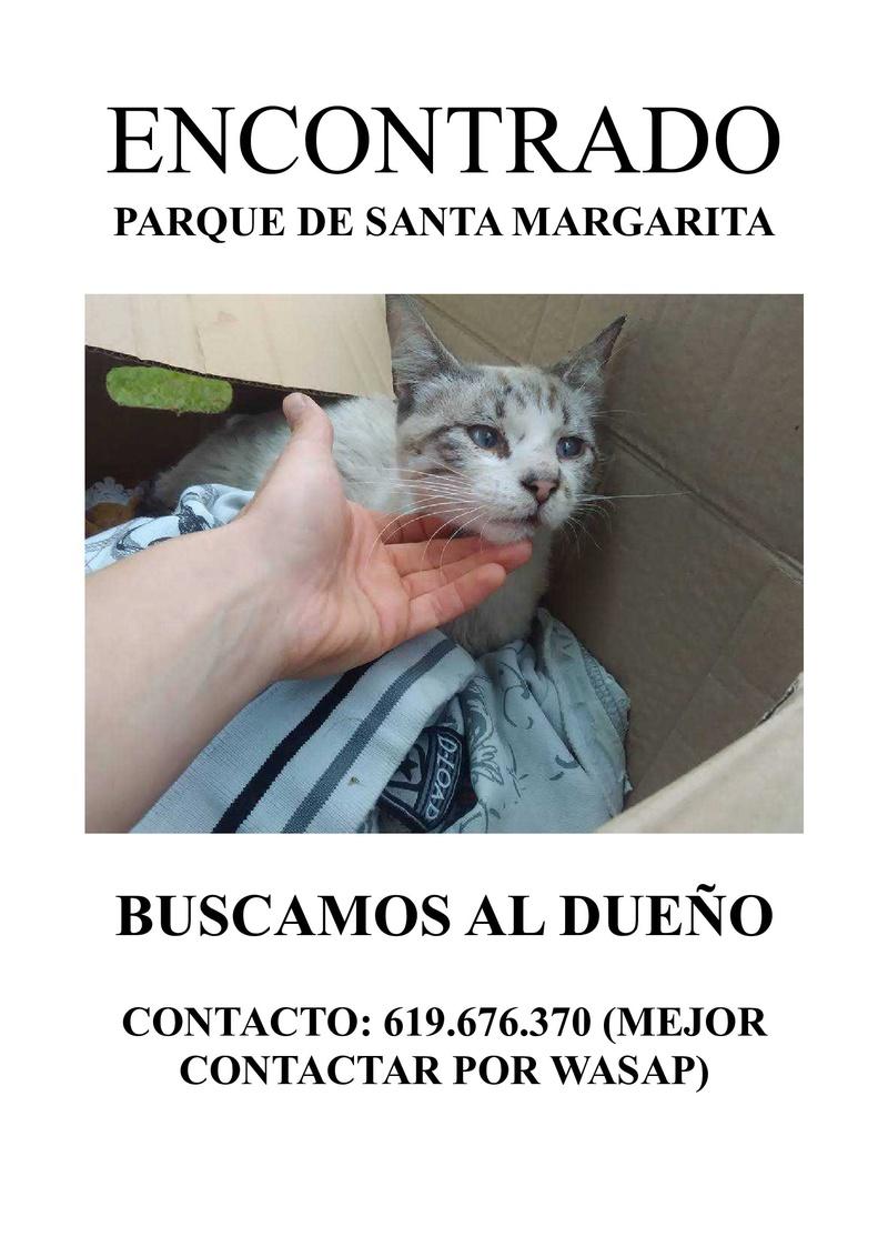 gato encontrado en Santa Margarita Gatete10