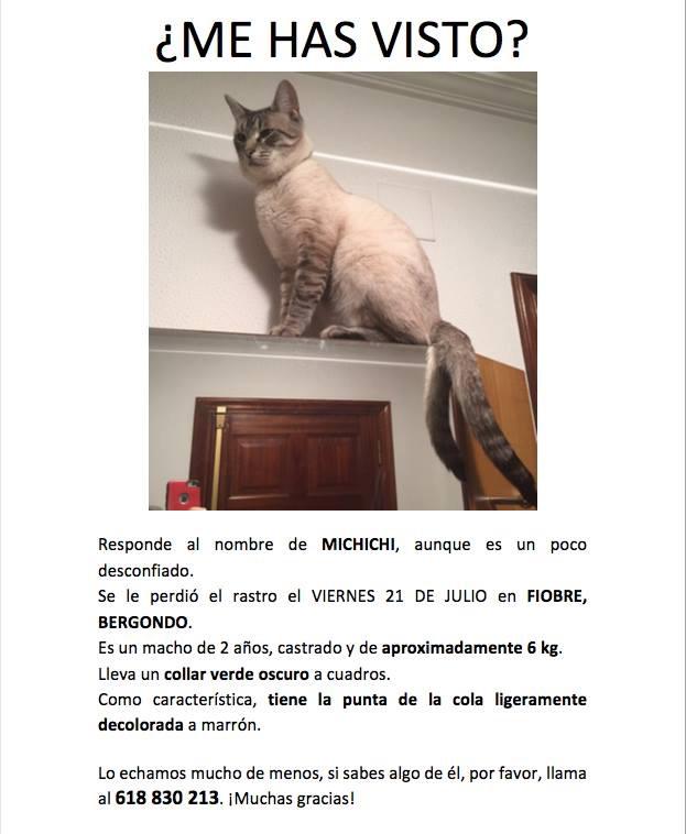 Gato perdido en bergondo Image112