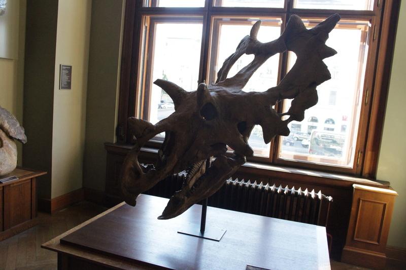 Museo de Historia Natural de Viena Img_5033
