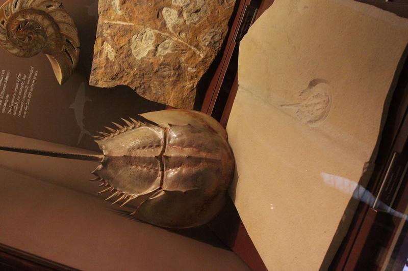 Museo de Historia Natural de Viena Img_5036