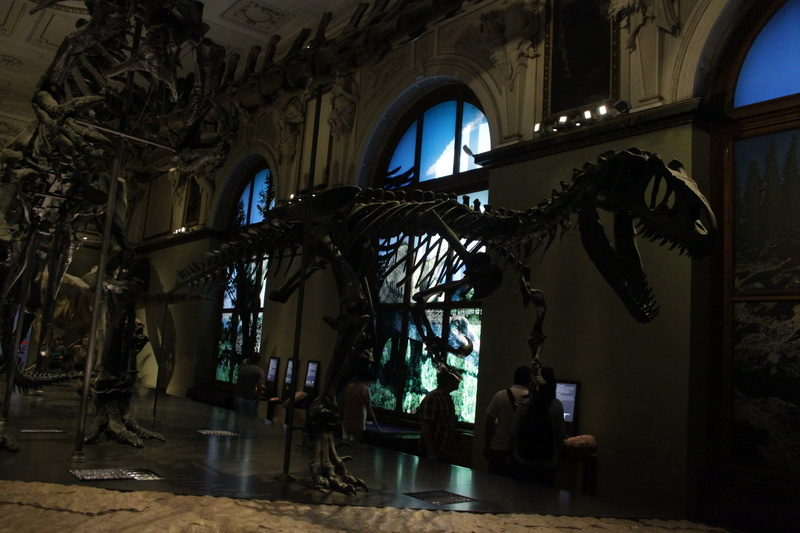 Museo de Historia Natural de Viena Img_5111