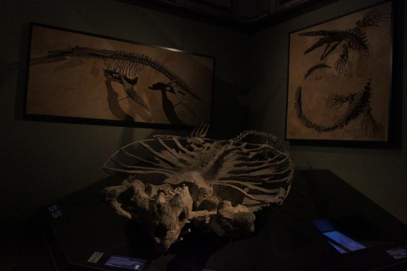 Museo de Historia Natural de Viena Img_5112