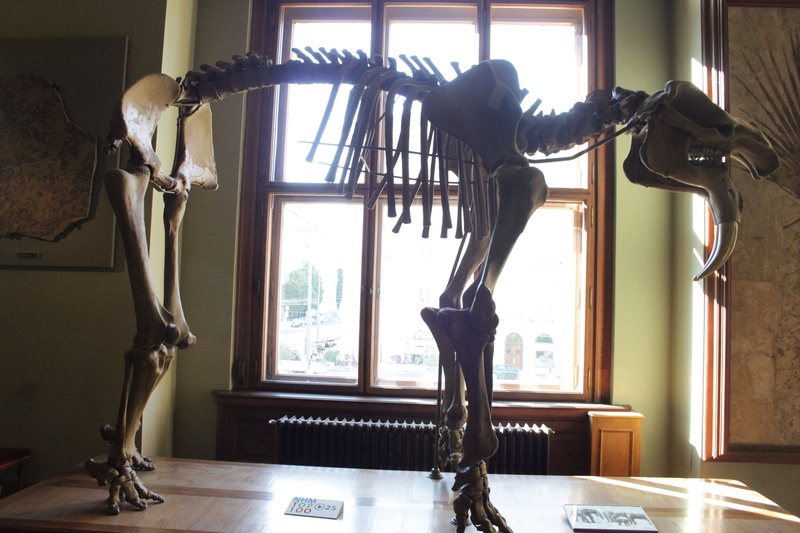 Museo de Historia Natural de Viena Img_5113