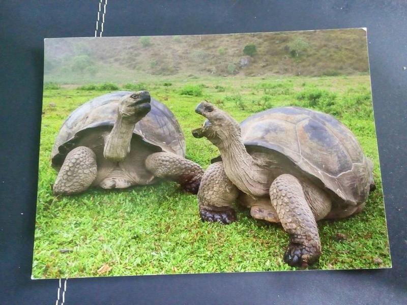 Sobre o postal de Ecuador - Página 2 22140810
