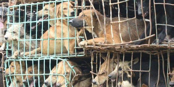 Защитим животных! - Страница 3 Yoyo-111