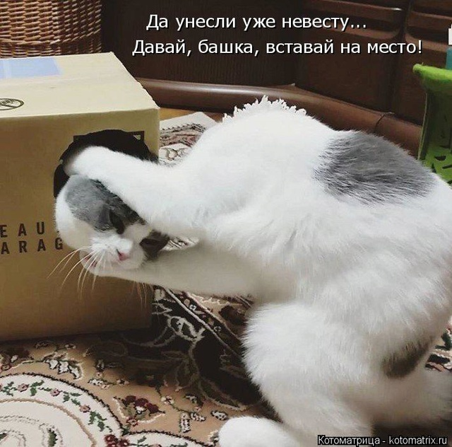 Смешные картинки! Kotoma14