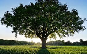 Общение с деревьями Images11