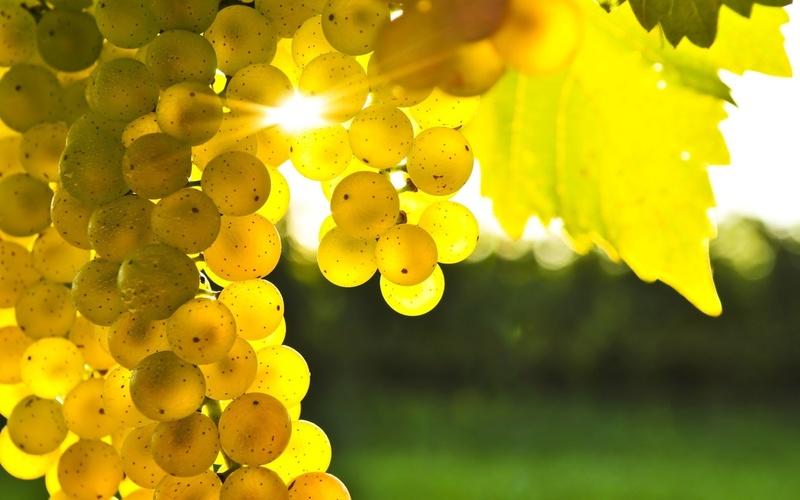 Легенды о винограде Uva-ch10