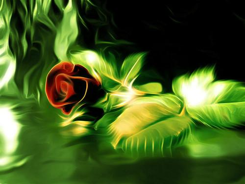 HÌNH PHONG CẢNH THIÊN NHIÊN Rose-f10