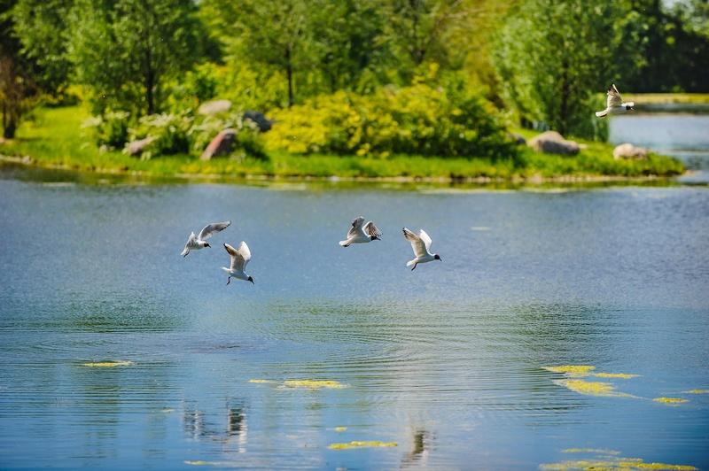 """Природа у ЖК """"Летний сад"""" - Страница 3 5bv2pw10"""