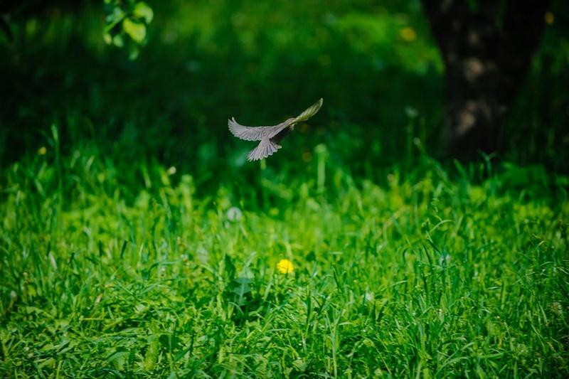 """Природа у ЖК """"Летний сад"""" - Страница 3 5y1iun10"""