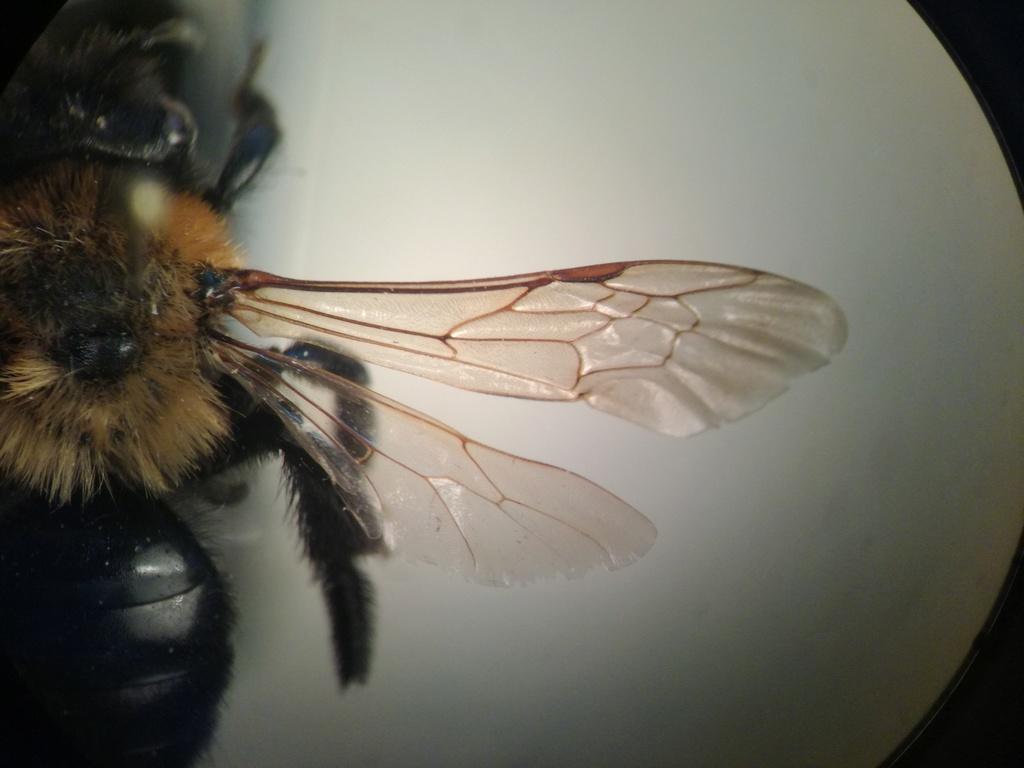 Andrena Img_2012