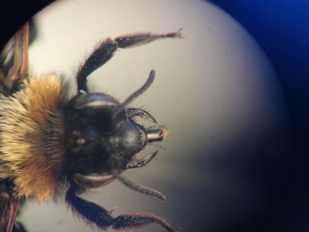 Andrena Img_2014