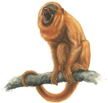 Objevitelská liga - Honba za zlatou opicí Small10