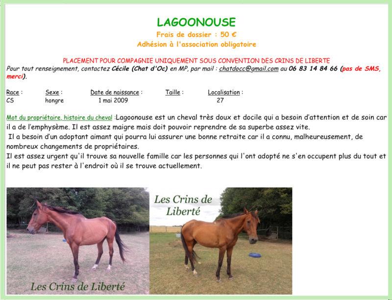 Dpt 27, 18 ans, LAGOONOUSE, hongre CS, sauvé par Laura (2017) Décédé Fiche_15