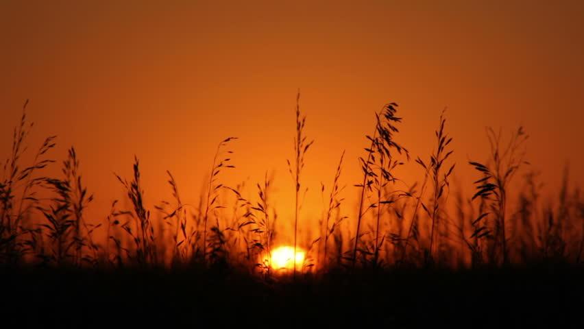 Cổ học tinh ma : Sự tích về một nửa Sunset10