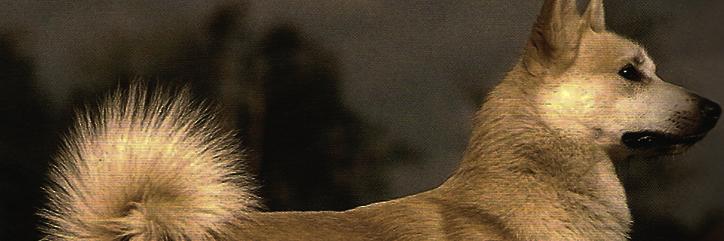 4.-Los perros en Wyrd Buhund10
