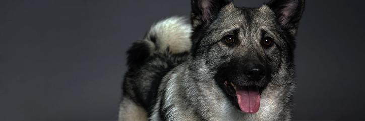4.-Los perros en Wyrd Cazado10