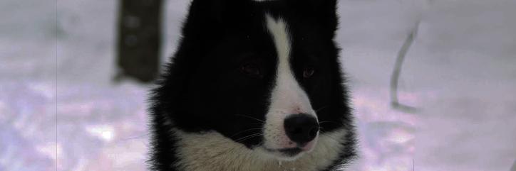 4.-Los perros en Wyrd Perro_10