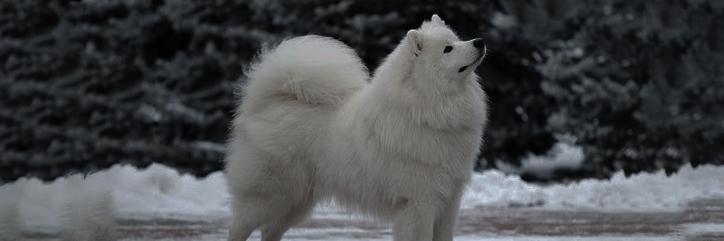 4.-Los perros en Wyrd Samoye10