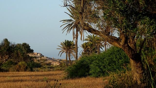 No Cabo de Gata  Dsc00422