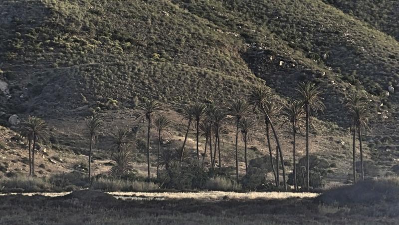 No Cabo de Gata  Dsc00424